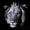 zdjęcie lwa w czerni black bear house
