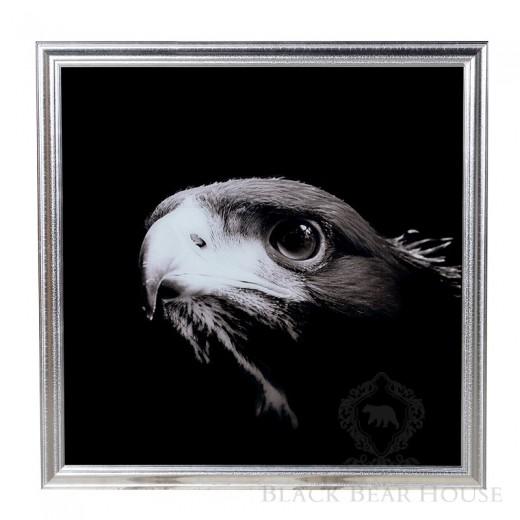 zdjęcie orła black bear house