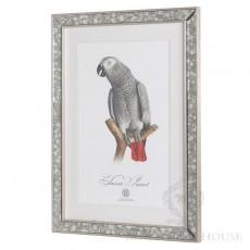grafika papuga w lustrzanej ramie black bear house
